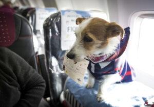 Hond meenemen op vakantie naar Griekenland